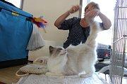 Když se vše točí kolem koček