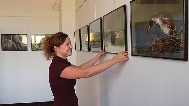 Referentka ostrovského informačního centra Martina Novotná dolaďuje výstavu fotografa Rostislava Stacha.