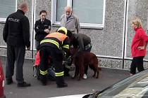 Hasiči zachránili z hořícího bytu přiotráveného psa