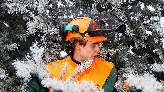 Dřevorubec upravuje vánoční strom v Karlových Varech.