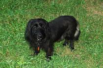 """Bert. Kdysi odložený pes je už devět let členem rodiny. """"Neumím si představit, že bychom ho do útulku vrátili,"""" říká jeho majitelka."""