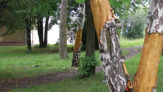 Vandalové zničili stromy.