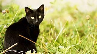 je černá kočička jiná