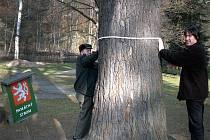 Šéf odboru životního prostředí kraslické radnice Jiří Hejkal (v pravo) také monitoruje na Kraslicku památné stromy.