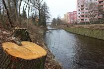 Povodí Ohře pokácelo vzrostlé stromy u řeky Rolava na sídlišti Čankovská.
