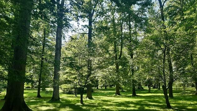 Les, ilustrační foto