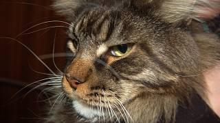 hubená kočka velká kočička
