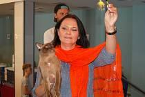 Karlovarský klub koček zorganizoval v lázních už 38. a 39. ročník mezinárodní výstavy