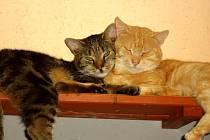 NAPLNIT opuštěným kočkám misku mohou zájemci například i po internetu z domova.