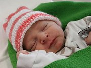 ELION TOLEJ z Chebu se narodil 17. 8. 2017
