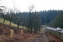 Starý sad u silnice Stará pražská, kudy do města přijíždí mnoho hostů, prokoukl. Zmizely odsud náletové keře i staré a nemocné stromy. Místo nich byly vysazeny stromy nové.