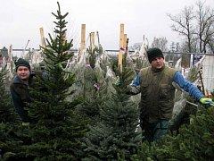 UŽ ŠESTÝ ROK jezdí do Karlových Varů prodávat vánoční stromky dvojice Slováků Janko a Lukáš.