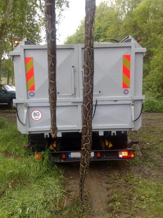 Šestimetrového škrtiče našli v úterý lesáci mezi kládami na skládce dřeva nedaleko Vykmanova. Mrtvý had skončil v kafilérii.