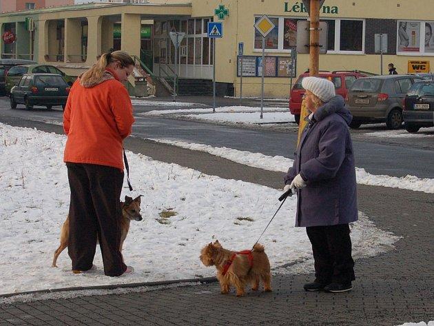 Nová vyhláška má dát jasná pravidla pro volný pohyb psů a také se zaměřuje na povinnosti chovatelů v souvislosti s evidencí.