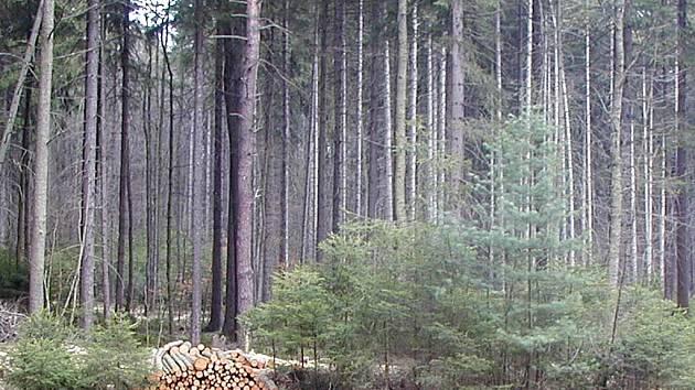 Hlavním cílem nákupu lesních pozemků od soukromých vlastníků je  z pohledu žlutické radnice sjednocení ´rozkouskovaných´ lesních parcel.