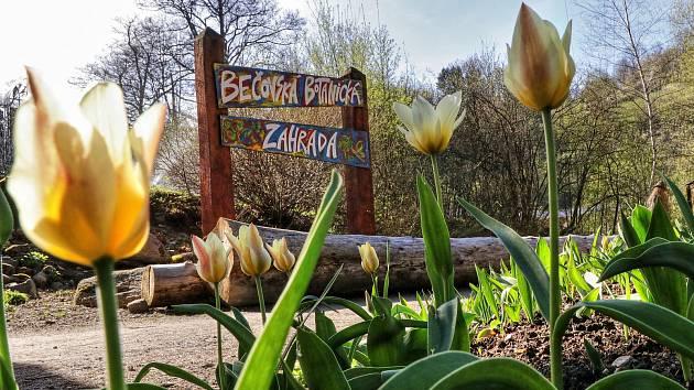 Z Bečovské botanické zahrady.