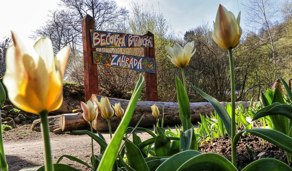 Z Bečovské botanické zahrady. /náhledové foto/