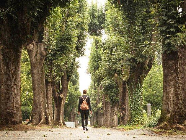 Vybrat můžete kterékoliv stromořadí, které vás zaujalo svým příběhem, lokalitou nebo jen svou krásou. Udělit nominaci je snadné. O vítězi pak rozhoduje veřejnost.
