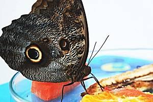 DOBROU CHUŤ. Jeden z mnoha obyvatel Motýlího domu si právě dopřává oběd.