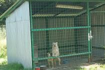 Zde měl stát dům. Současný nejdecký psí útulek měl nahradit bytový dům. Zastupitelé ale tento projekt nakonec neschválili.