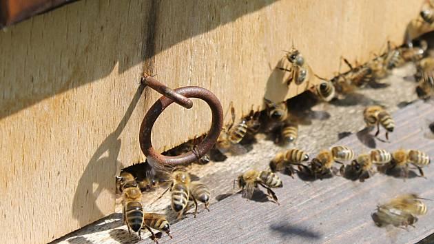 Včel je v letošním roce mnohem méně.