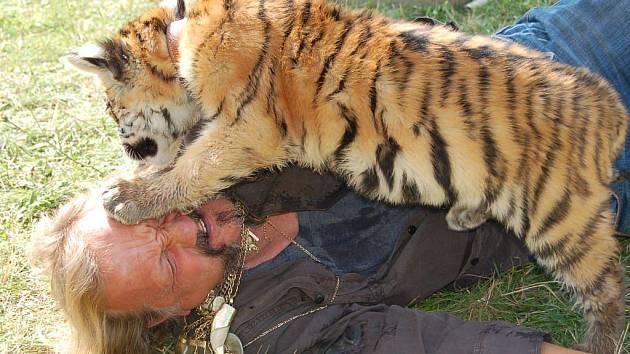 V době naší návštěvy dostal Jaromír Joo nápad na nové, a jak už u něj bývá takřka pravidlem, opět nebezpečné číslo – nechá tygřici Taigu, která je zatím takovým netradičním domácím mazlíčkem jeho manželky, žrát maso přímo z obličeje. Takže za dva roky…