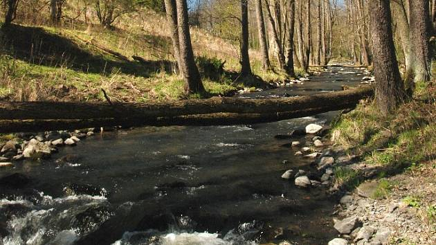PŘEHRADA Hlubocká Pila by měla vzniknout v údolí potoka Liboc.