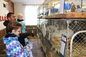 Chovatelé z Aše připravili výstavu drobného zvířectva.