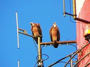 Neobyčejní návštěvníci z ptačí říše zavítali do Sokolova
