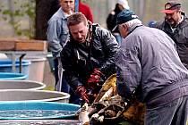 VÝLOVŮ NĚKTERÝCH RYBNÍKŮ se kromě rybářů může zúčastnit i veřejnost.