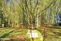 Památné lipové stromořadí najdete nedaleko Bečova, v údolí mezi Hůrkou a Dřevařským vrchem.
