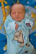 Mareček Nedvěd z Vodné se narodil 27. 3. 2013