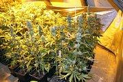 Z policejních zásahů proti drogám.
