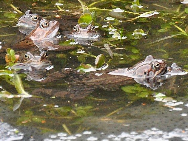 V Olšových Vratech mají vzniknout dvě jezírka pro žáby