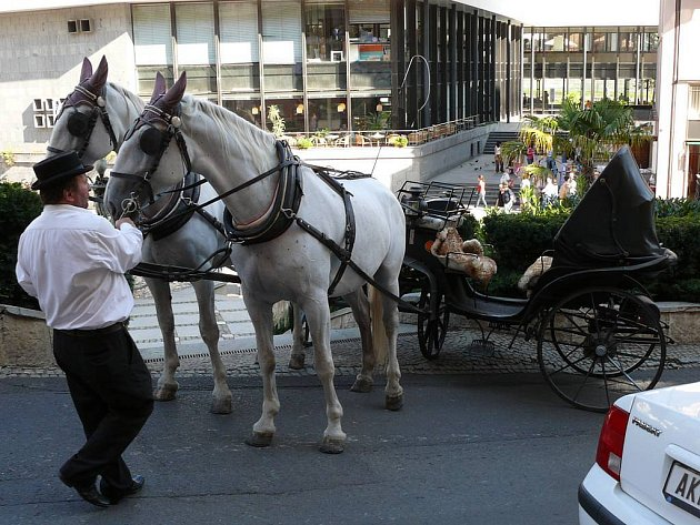 Koně ve stresu. Na snímku už jsou koně, které drsně předjelo auto v centru lázní,  zklidněni, ale k neštěstí opět nebylo daleko.