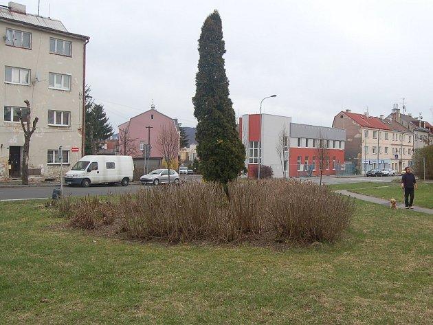Keř v ulici Závodu míru ve Staré Roli byl také podroben ořezání. Nejedná se však o zásah, který by rostlinu zahubil.
