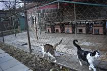 Spolek provozuje i útulek pro psy a kočky.
