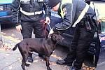 Pes, kterého se podařilo zachránit na R6, putoval do útulku.