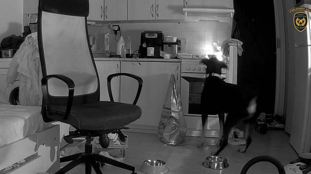 Požár kuchyně zavinil pes, který hledal něco k snědku