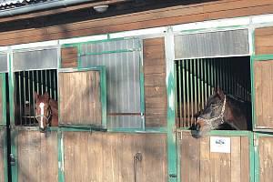 Vánočních dárků se v děpoltovickém Pegasu nedočkají pouze děti, ale i koně.