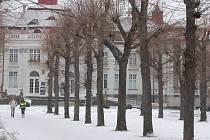 Tichá hrozba. Zlínská tragédie upozornila na nebezpečí padajících stromů v centrech měst. To by se bez důkladných kontrol mohlo stát klidně i v Karlových Varech.