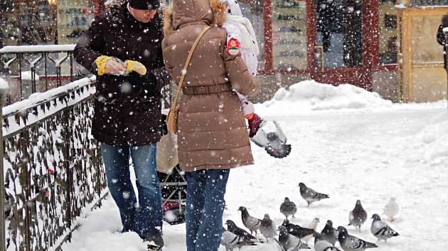 KRMENÍ HOLUBŮ je v Karlových Varech, zejména pak v lázeňské části města, zakázáno. Jak vidno z našeho snímku, holubi se ale potravy dožadují, ať je zima nebo léto. A mnohdy uspějí.