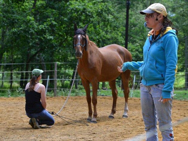 Kůň Percy a vymezení osobního prostoru. Spousta koní nerespektuje intimní zónu svých lidí a je třeba to řešit včas.