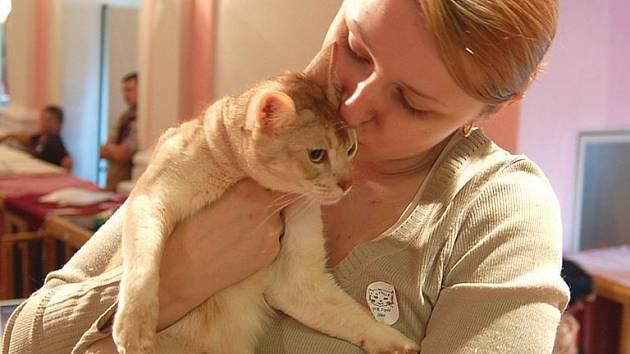 Výstava koček. Karlovarský klub koček pořádá výstavu v Chodové Plané s mezinárodní účastí.