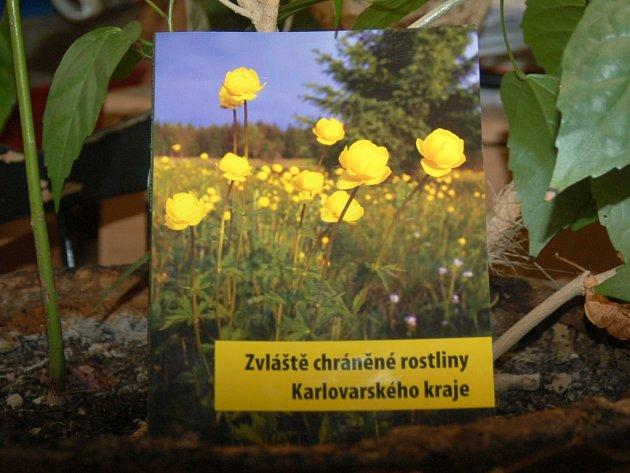 Zvláště chráněné rostliny Karlovarského kraje.