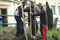 Studenti třetího ročníku karlovarské Obchodní akademie v Bezručově ulici včera sázeli před školou tři nové stromy.