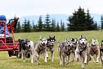 Mistrovství České republiky psích spřežení na kárách bude hostit po dva víkendové dny město Abertamy.