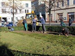 Proměna oválu ve středu Masarykova náměstí. Pokládání travnatých pásů se konalo 21. listopadu 2016.