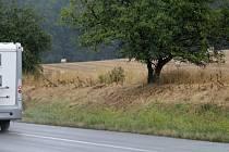 Keře zasazené uprostřed léta kolem silnice E55 tropické teploty a sucho nevydržely.