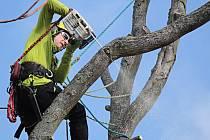 Kácení nebezpečného stromu v Jiráskově ulici v Benešově.